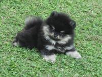 pp_puppy_200x1512